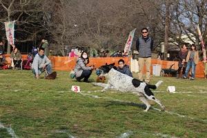 dog-fes-feb-1