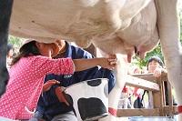 16-cow fes2