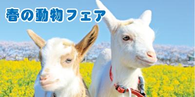 spring_fair_mini2