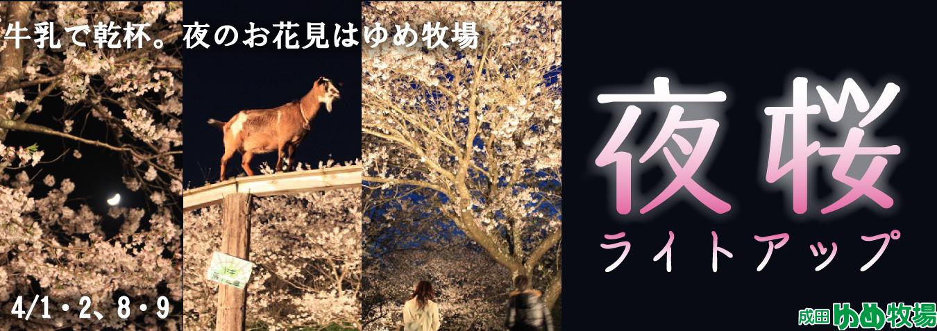 夜桜ライトアップ2017