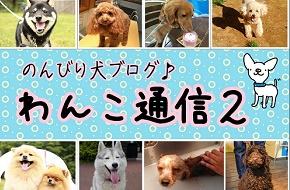 わんこ通信2
