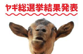 ヤギ総選挙結果発表