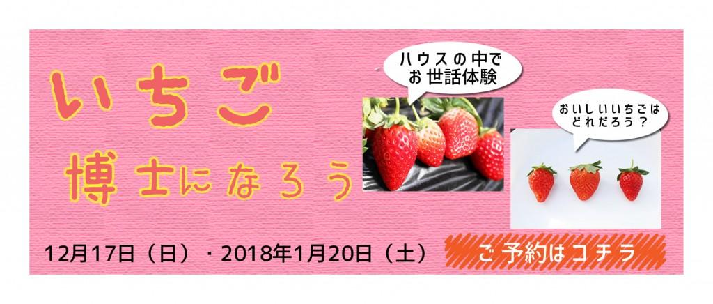 ichigohakase-bn