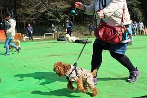 2月の犬祭り~わんちゃん大運動会~
