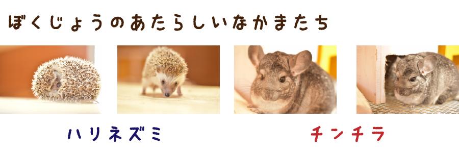 new-animal_bn