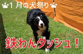 1月の犬祭り~鉄わんダッシュ~