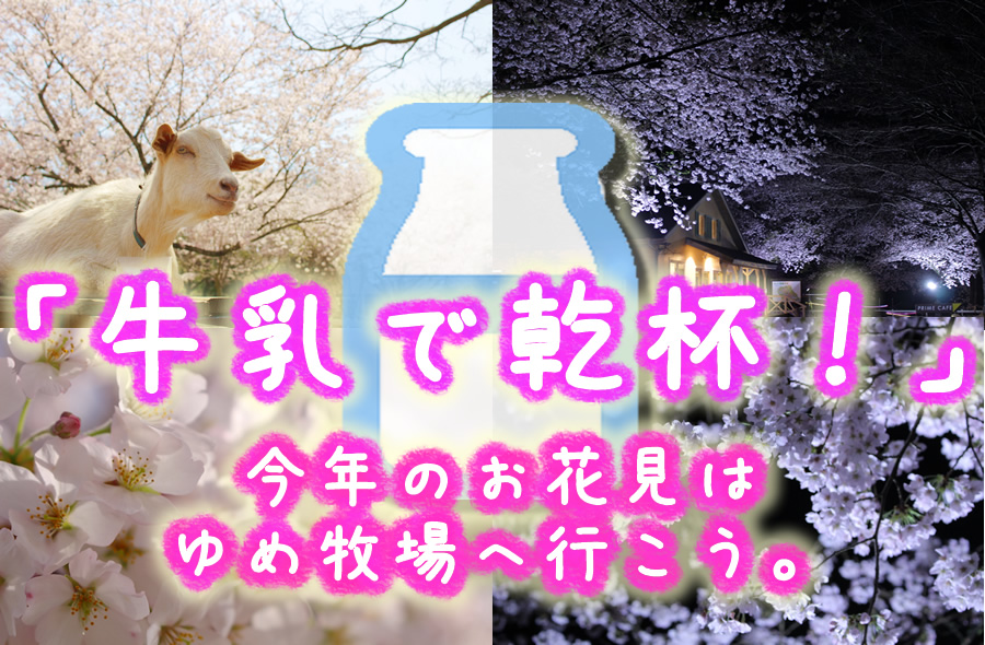 「牛乳で乾杯!」今年のお花見はゆめ牧場へ行こう