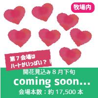 7coming-soon