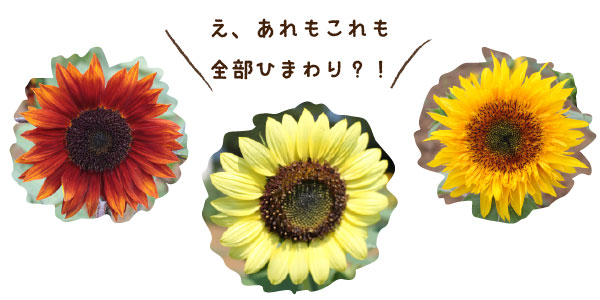himawari-sannpo_bn