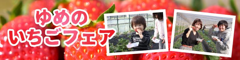 ichigo_bn