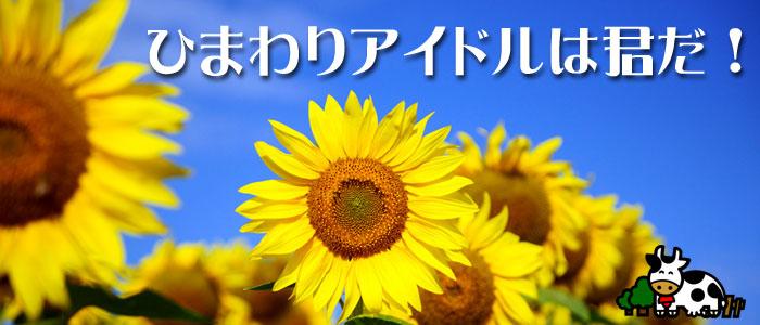 成田ゆめ牧場 ひまわりアイドル
