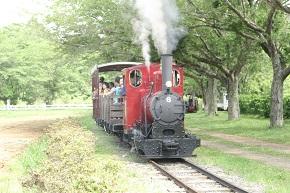 本物のSL(蒸気機関車)運行