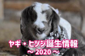 ヤギ・ヒツジ赤ちゃん誕生情報