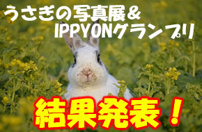 【結果発表】うさぎの写真展&IPPYONグランプリ