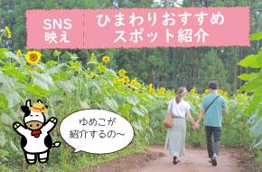 SNS映え!ひまわりおすすめスポット紹介