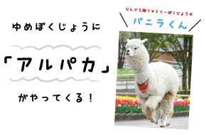 【9/27】ゆめ牧場に「アルパカ」がやってくる!